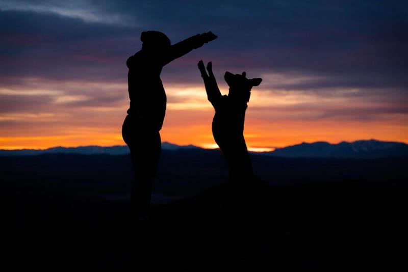 CBD For Pets - CBD Articles - Mindful Medicinals Sarasota